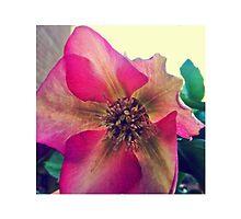 Pink Flower by haleeec