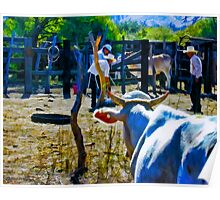 Cow Looking On Poster