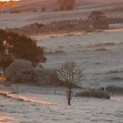 Thick frost over the paddock. by Rita Blom