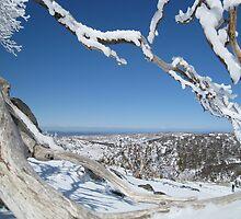 View through Snow Gums by jillgoff