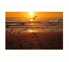 Sea Gulls Art Print
