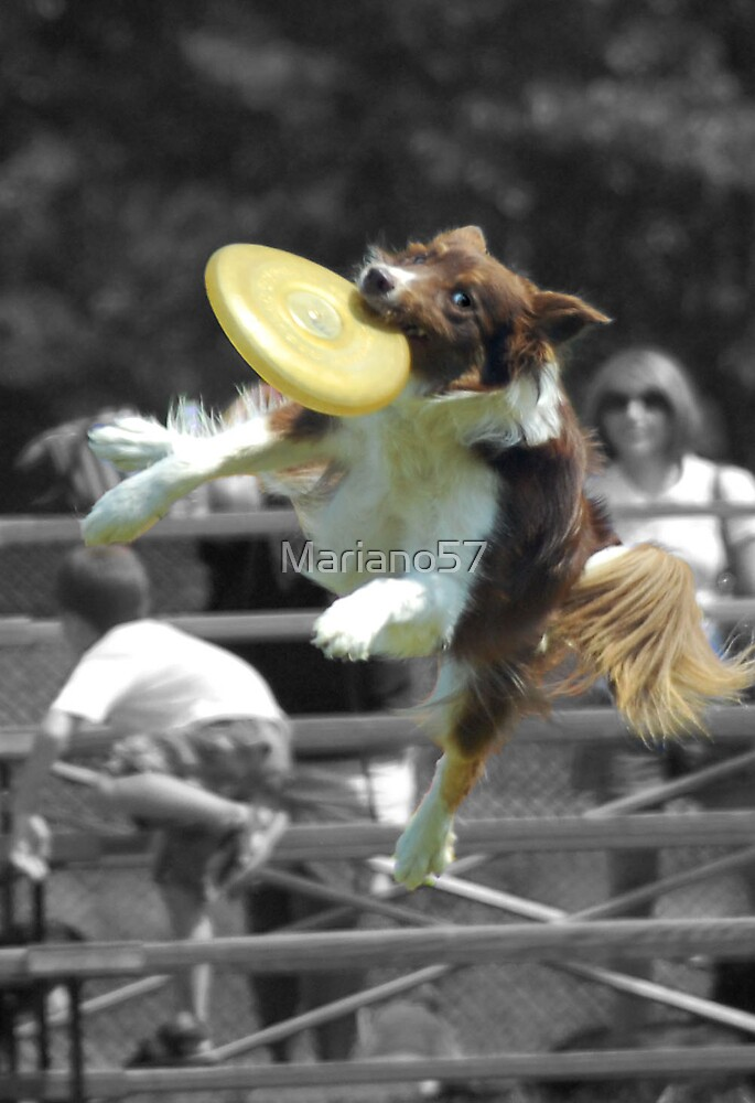 Flying Dogs by Mariano57