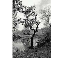 The Crooked Tree Photographic Print