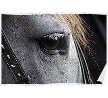 Romantic Horse Close Up Poster