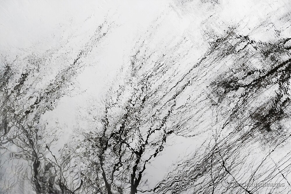 Winter Trees Reflections by enchantedImages