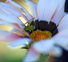 Tasty Daisy by Renee Hubbard Fine Art Photography