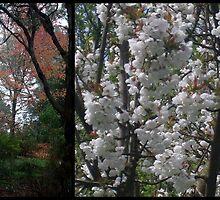 Autumn Spring Serenade by GemmaWiseman