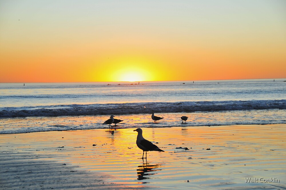 Sea Gull Silhouettes at Sunset by Walt Conklin