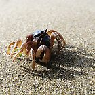 Crab by Elizarose
