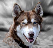 Siberian Husky by Simon Hackney