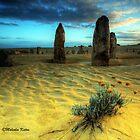 Desert Beauty, Nambung NP, WA by Malcolm Katon