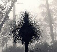 Misty morn by johnporter