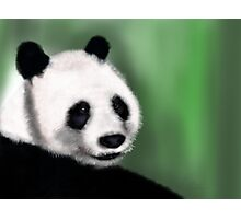 Panda Yang Guang  Photographic Print