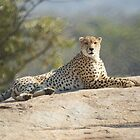Relaxing Cheetah by Kristiane Anderson