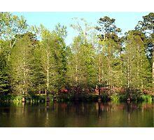Spring Cypress Photographic Print