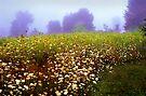The Secret garden by Yuri Lev