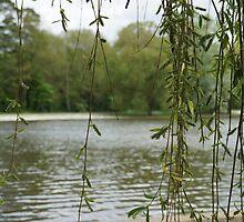 Through the willow by NikkiMatthews