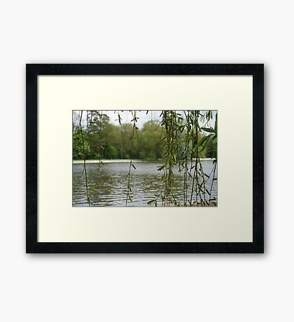 Through the willow Framed Print