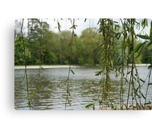 Through the willow Canvas Print