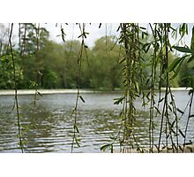 Through the willow Photographic Print
