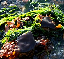 Colors Of Seaweed by starlitewonder