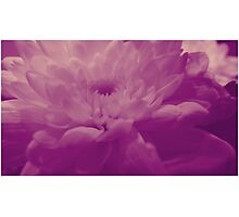 Layer upon layer Photographic Print