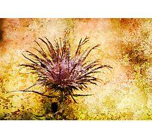 Beautiful Weeds Photographic Print
