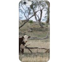 Grazing Cow  iPhone Case/Skin