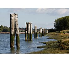 Pilings Along the Shore Photographic Print