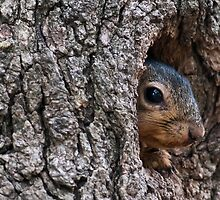 Hoo Dare? by Charles Dobbs Photography