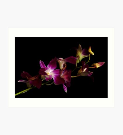 Orchids Royal Art Print