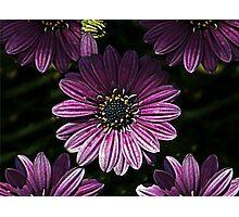 Blooming Purple Photographic Print