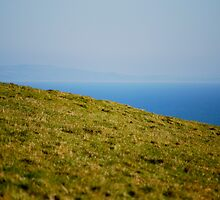 Grass and Sea by Claire Elford