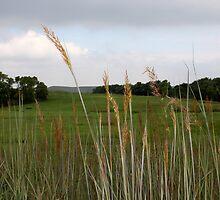 Country View  by Deborah  Allen