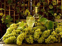 Grape Harvest by mikebov