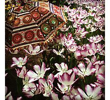Tulip Garden with Flair Photographic Print