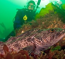 Ling Cod and Diver by Greg Amptman