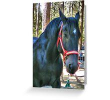Beautiful Black Draft Horse Greeting Card