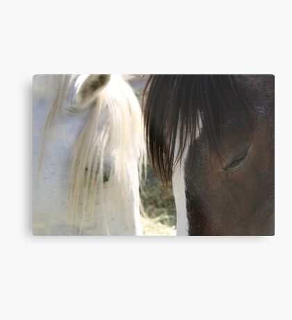Equine eyes.... Metal Print