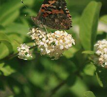 Butterfly by SGarrity