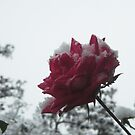 Snow White and Rose Red by ShutterlyPrfct