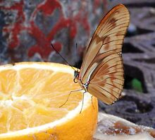 The Lemon Butterfly by Tahliah