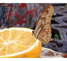 The Lemon Butterfly Photographic Print