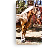 Blond Draft Horse Canvas Print