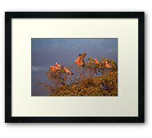 Gallah Tree Framed Print
