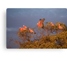Gallah Tree Canvas Print