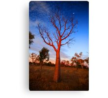 """Boab Sunset"" The Kimberley, Western Australia Canvas Print"