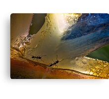 Ants in paradise Canvas Print