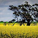 One Tree Field by Caroline Gorka
