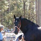 Beautiful Horse by NancyC